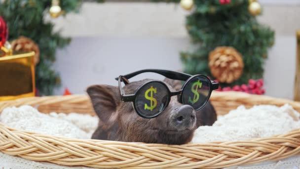 Ein süßes Schwein mit Sonnenbrille zum Feiern liegt am Korb