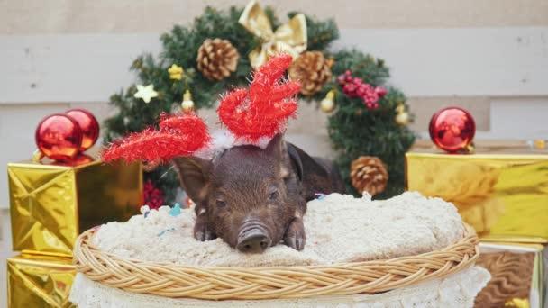 Egy aranyos disznó a karácsonyi szarvas szarv feküdt kosár
