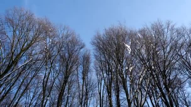 Panning shot of forest treetops in winter