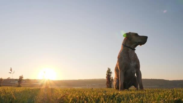 Pes chytání míče. Pes honí míč.