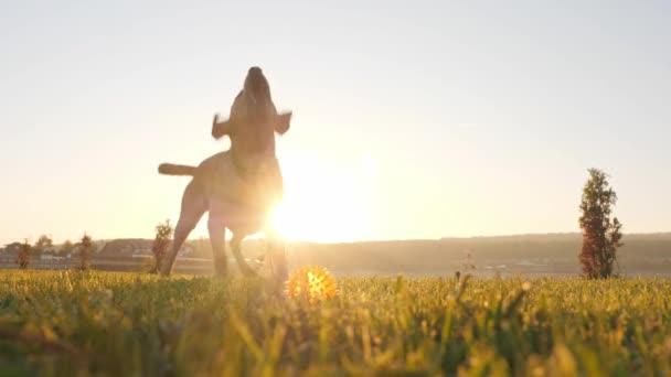 Detail pes štěká a vrtět ocasem při západu slunce