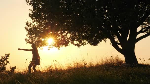 Képzés, és játszani vele aranyos kutya csodálatos naplemente alatt lány sziluettek. Lassú mozgás.