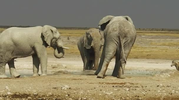 Elefanti zebre di Etosha