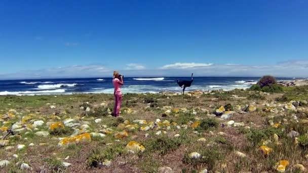 Wild Ostrich Cape Peninsula