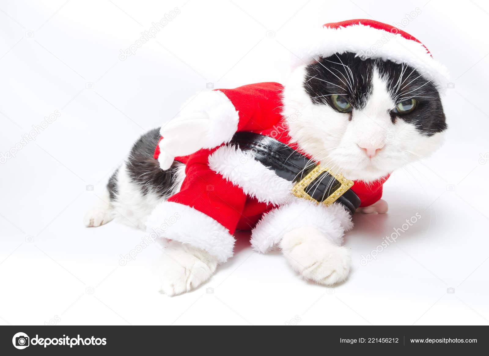 Gatto Di Babbo Natale Ubriaco Foto Stock Bennymarty 221456212