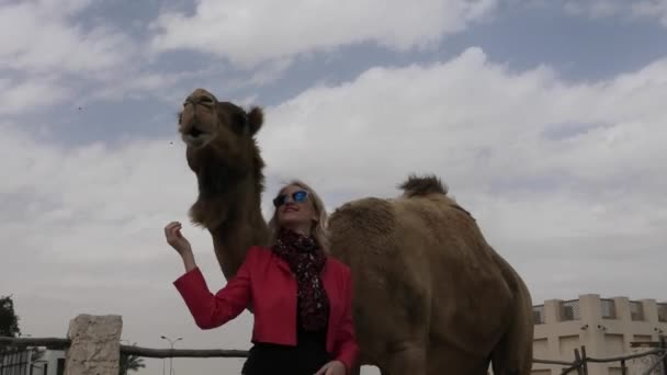 Woman touches camel