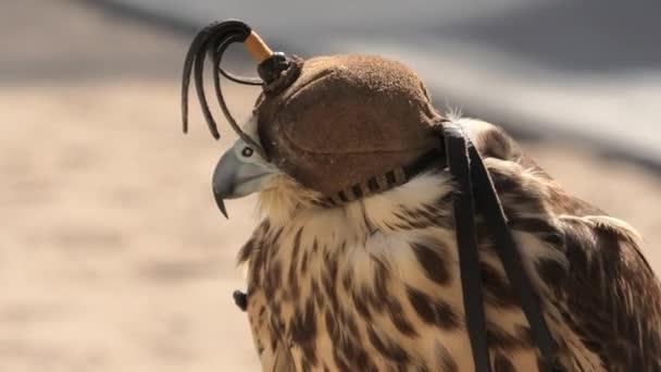 Falcon at Falcon Souq