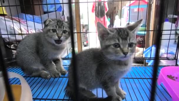 cat cubs in Souq