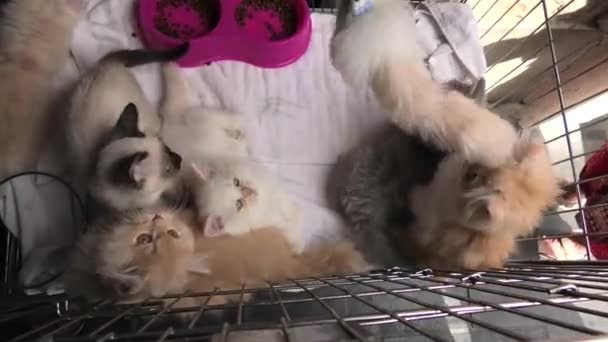 five kittens in cage looking and playing