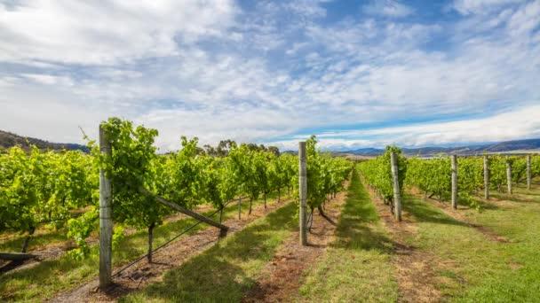 Australské vinice