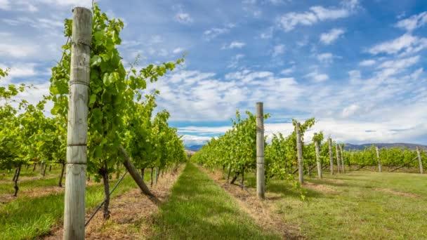 Vinohrady Tasmánie