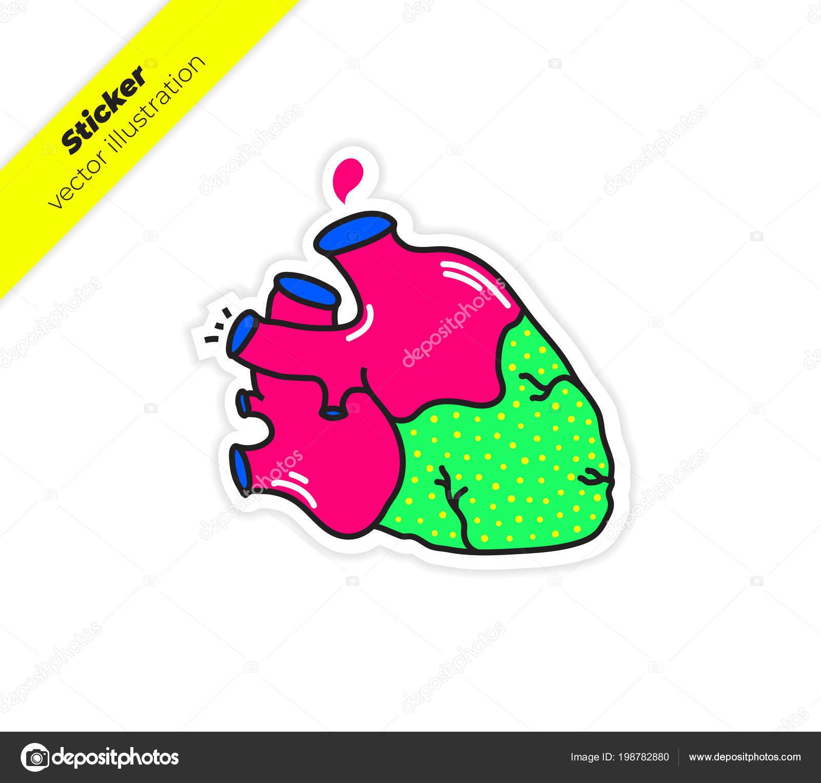 Corazón Anatomía Real Con Aorta Una Gota Ilustración Vector Etiqueta ...