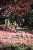 Nő áll a földön borított lehullott vörös juhar levelek Phu Kradueng Nemzeti Park, Loei, Thaiföld