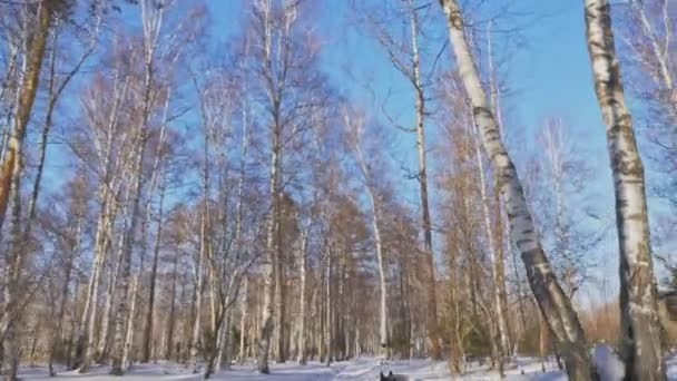 Beautiful woman and small child walking in winter forest with of husky dog. Happy young mother with daughter in the winter park with huskies dog. Siberian husky dog in snow forest.