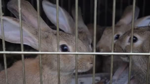 Kaninchen im Käfig Essen grass.