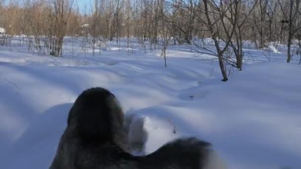 Krásná žena a malé dítě v zimním lese s husky psa. Šťastná mladá matka s dcerou ve winter parku s Husky psa. Sibiřský husky pes v lese sněhu
