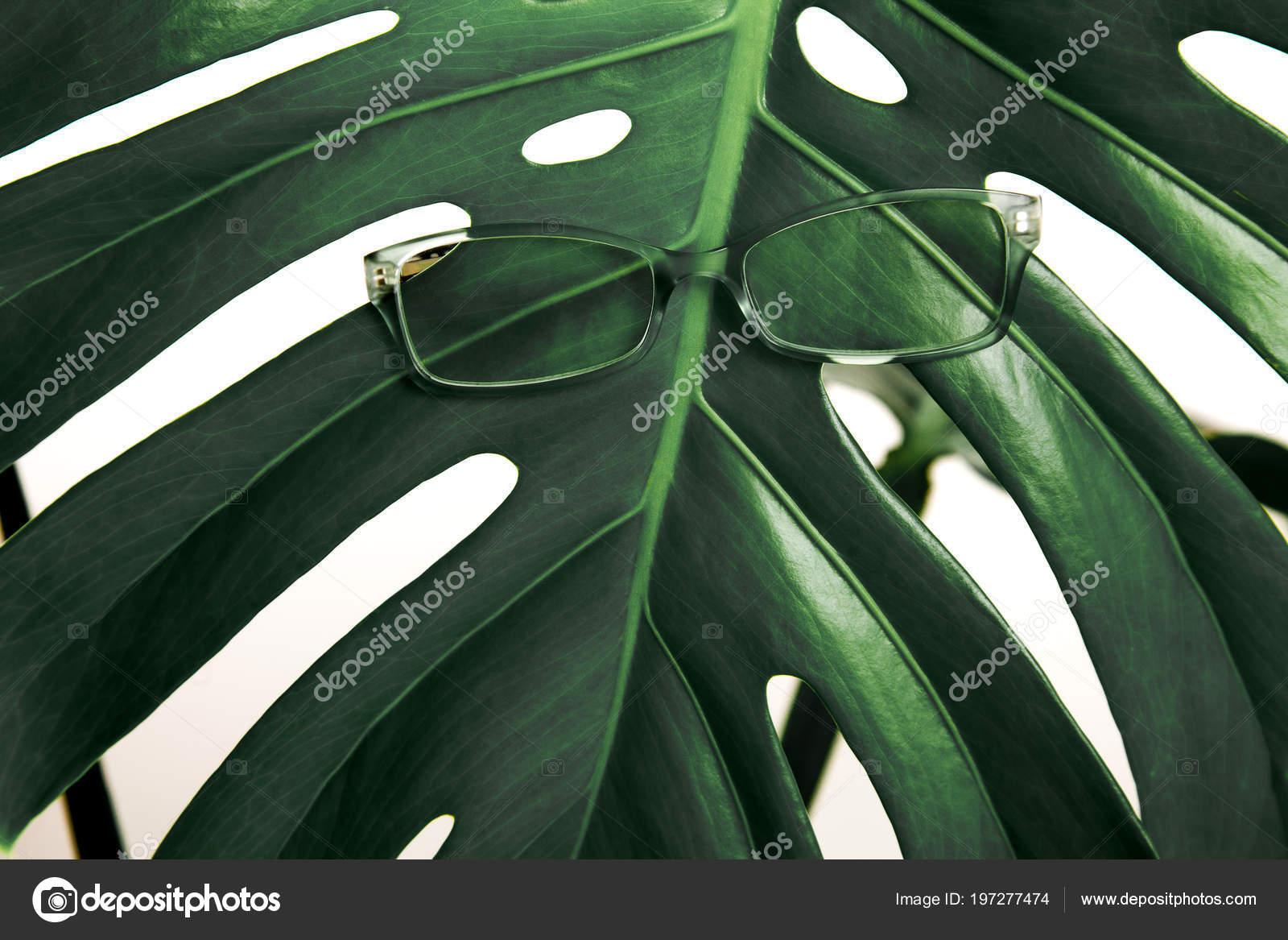 Vidrios Marco Verde Una Gran Hoja Verde Anteojos Tropical Verde ...