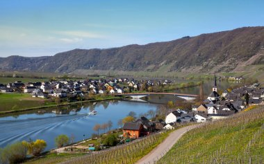 Mosel River and Vineyards Landscape in bright spring green at Piesport Rheinland Pfalz Germany