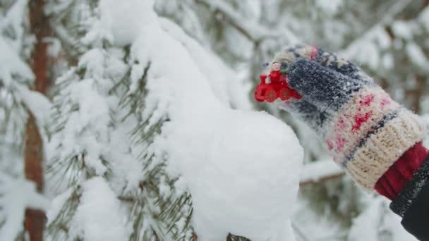 Vánoce v lese zimní
