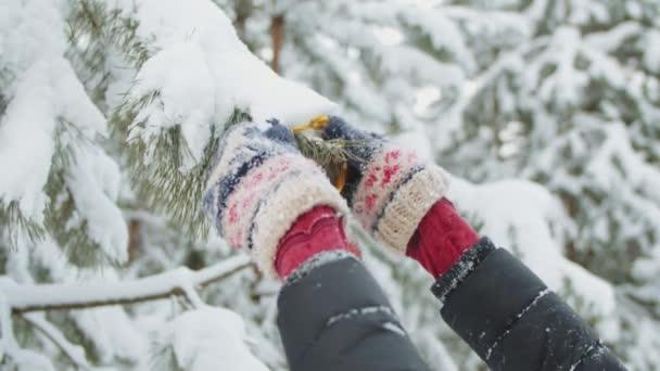 karácsonyfa díszítése a téli erdőben