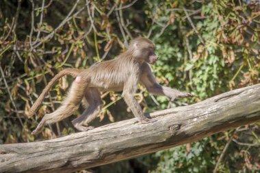 Close up shot of wild monkey