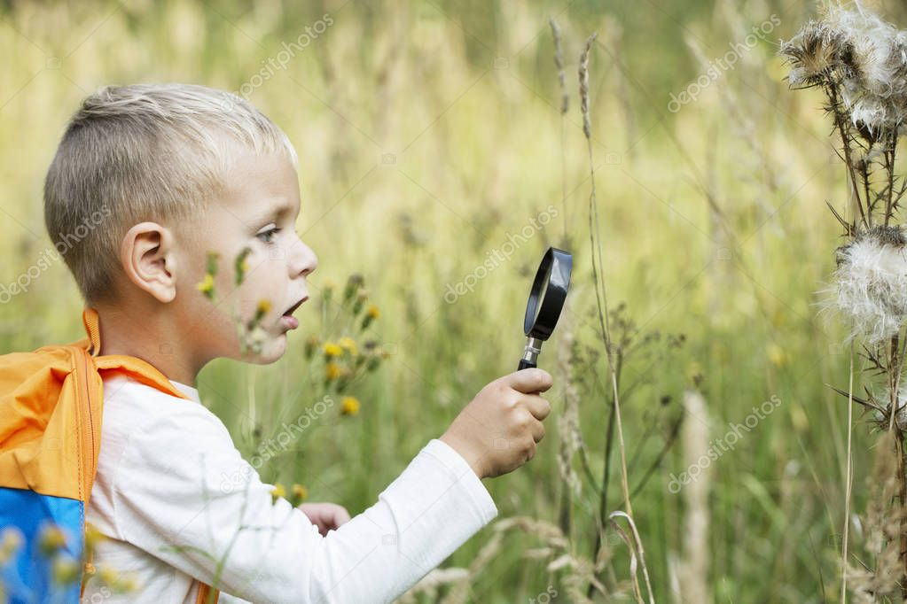 A small boy explores with a magnifying glass plants and insects, flora and fauna on a meadow on a sunny day