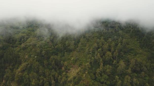 Deštný prales v mlhy a mraky. Bali, Indonésie