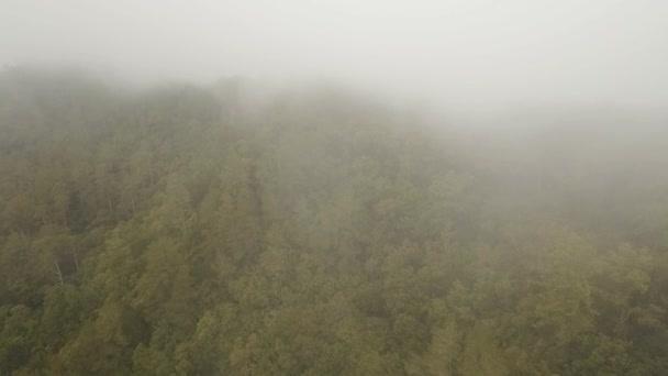 Deštný prales v cloudu, Bali, Indonésie