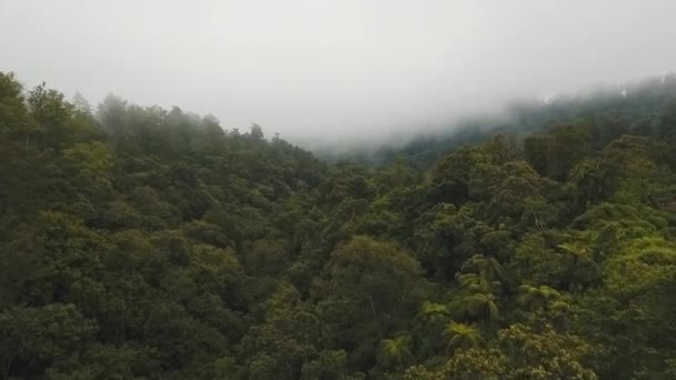 Esőerdő-felhő, Bali, Indonézia