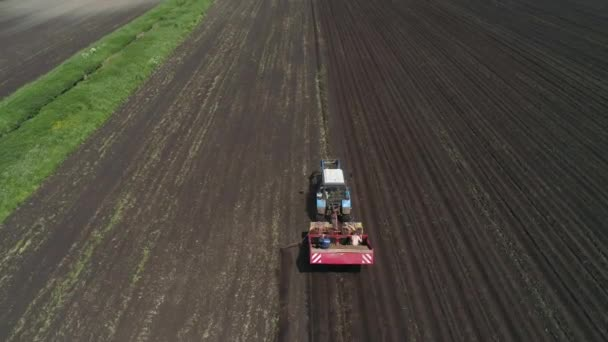 Sklizeň brambor na poli