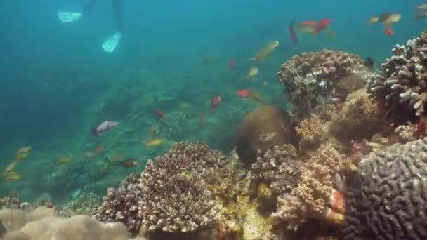 Barriera corallina e pesci tropicali. Filippine, Mindoro.