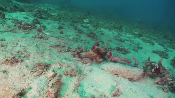 Scorfano sulla barriera corallina. Filippine, Mindoro