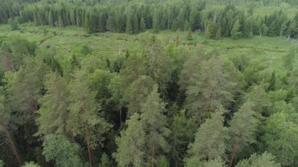 Repülés alatt a zöld erdő.