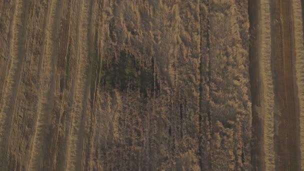 A légi felvétel egyesítése mező a búza betakarítás.