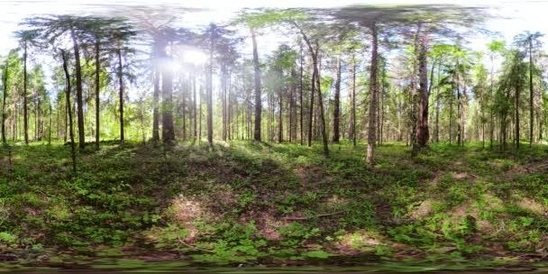 Gyönyörű zöld erdő Vr360
