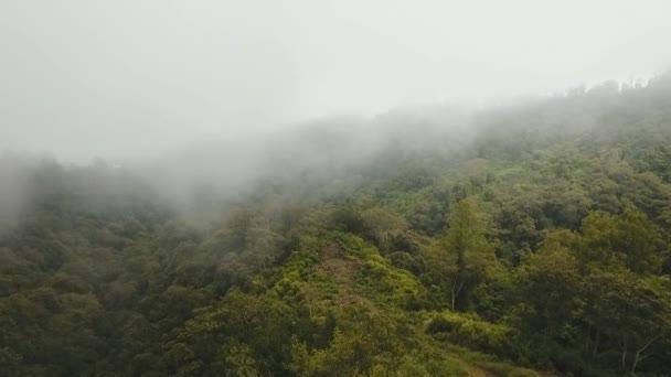 Deštný prales v oblacích, Bali, Indonésie.