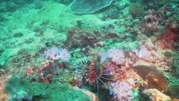 Barriera corallina e pesci tropicali. Filippine, Mindoro