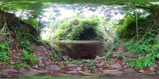 vr360 džungle řeka krajina v deštném pralese. deštný prales s zelená, svěží vegetace