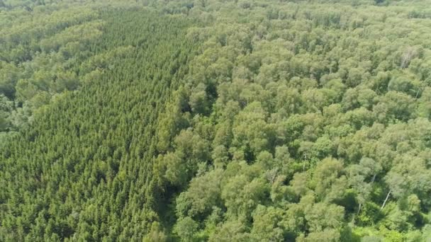 Let nad zelený Les.