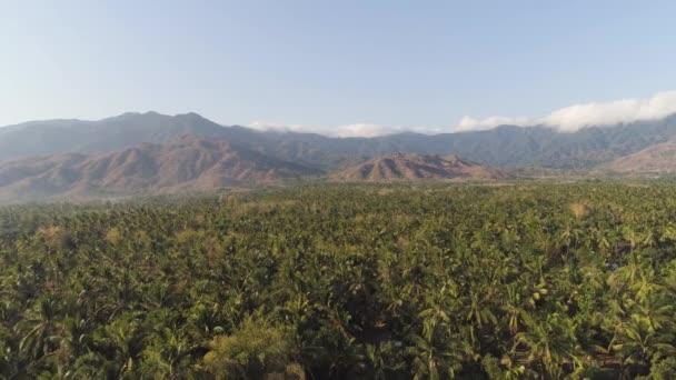 Tropická krajina s palmami a hory