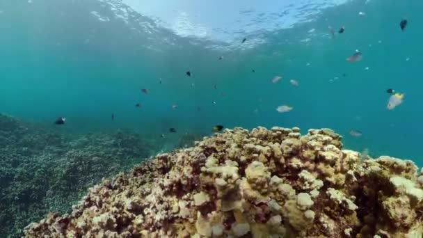barriera corallina e pesci tropicali
