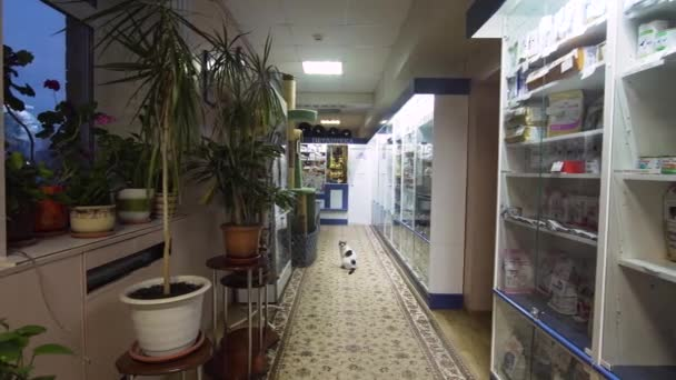Pharmacy store in a veterinary clinic.
