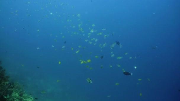 Korálové útesy a tropické ryby