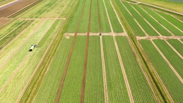 Zemědělská půda se zelenými plodinami shora