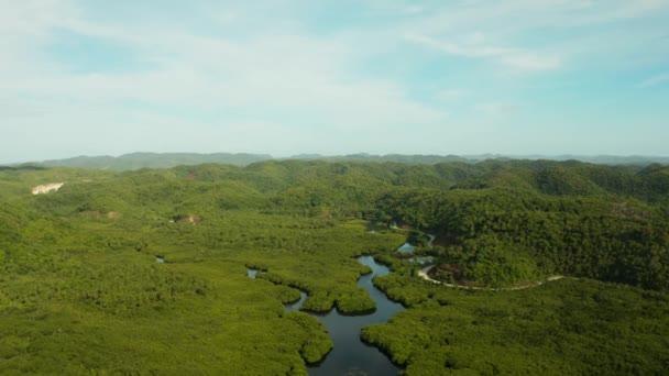 Vista aerea della foresta di mangrovie e fiume.