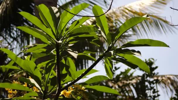 trópusi növényzet Indonéziában