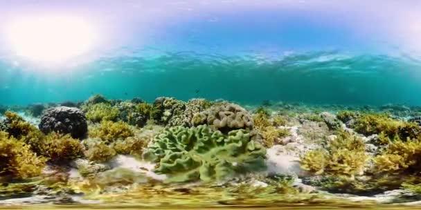 Il mondo sottomarino di una barriera corallina 360vr.