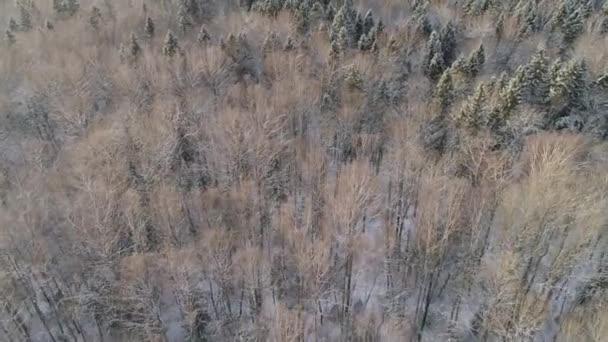 Zimní krajina s lesem.