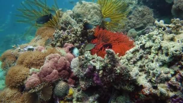 Korálové útesy a ryby pod vodou.