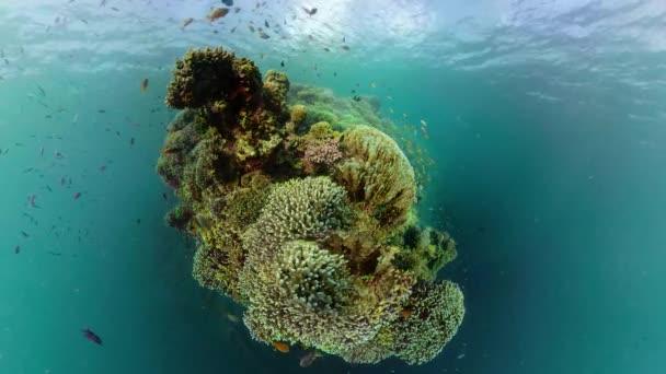 Korálový útes a tropické ryby. Camiguin, Filipíny